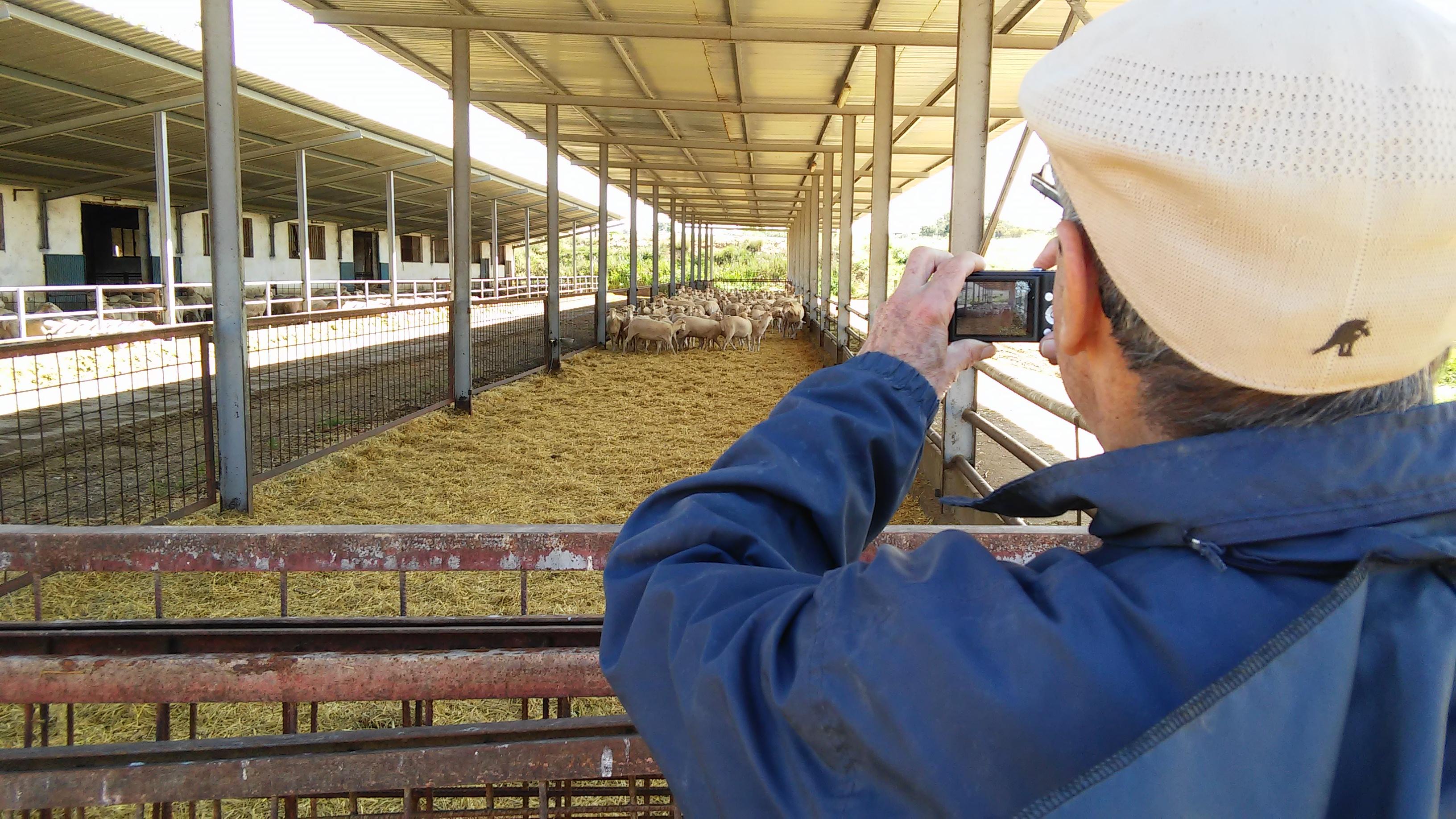pinheiro y ovejas de txema_27abr15