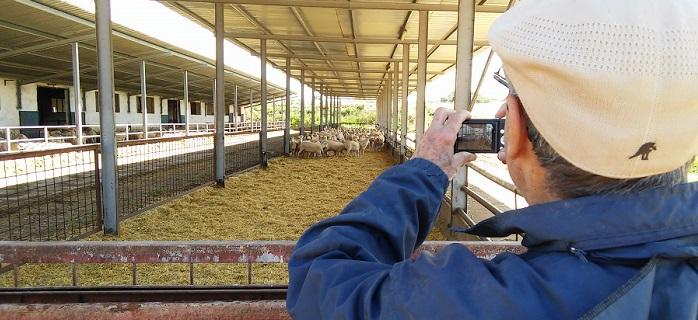 pinheiro y ovejas de txema_27abr15_small