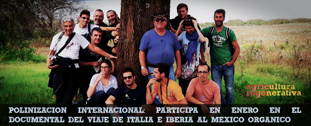 Polinizacion internacional_Italia Iberia Mexico_ene16