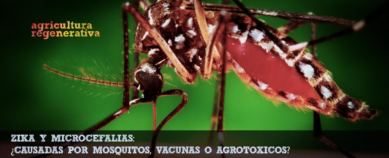 Pinheiro y Zika_Feb 2016